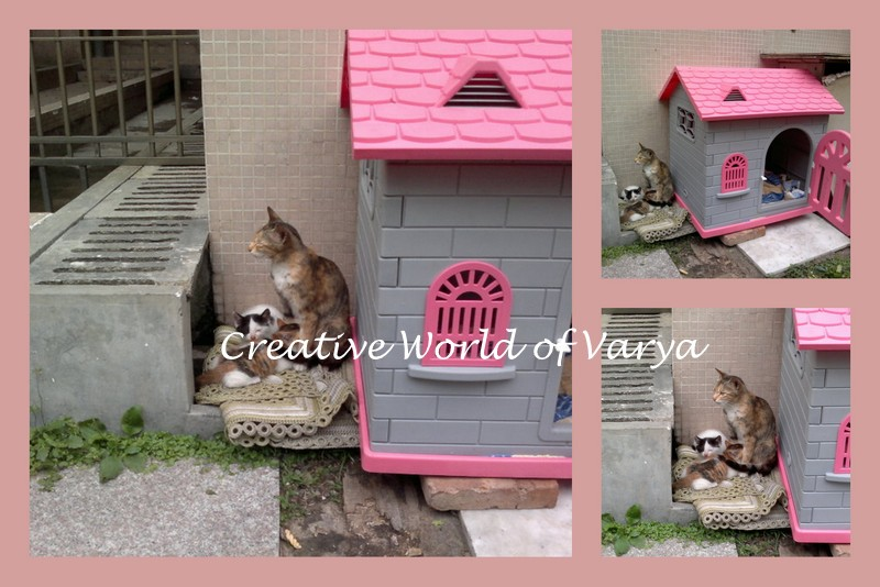 Silent Monday Kitty Cats in Our Garden